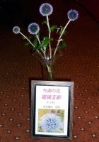 瑠璃玉薊 キク科 花言葉は「鋭敏」P1010692.JPG